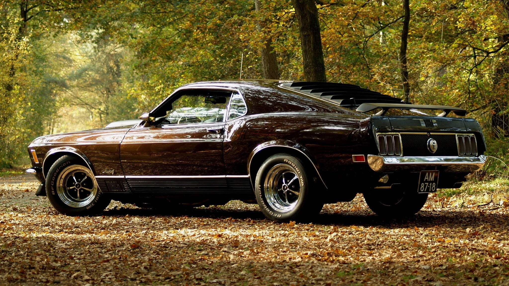 Brown Mustang Colors