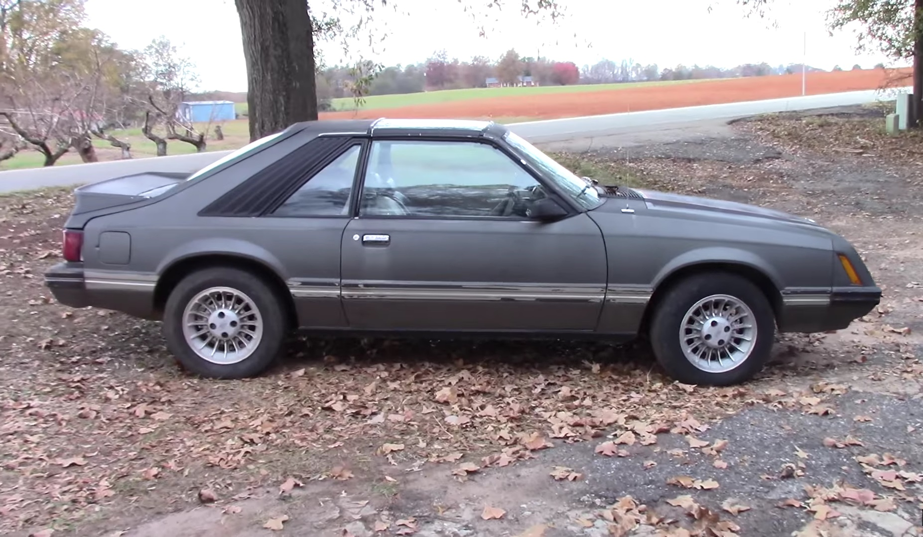 Video: First Driving Experience With A 1981 Ford Mustang